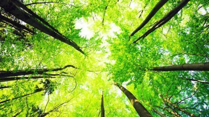 Живот в едно с природата