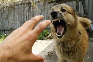Здравен-блог - ухапване от куче, правила